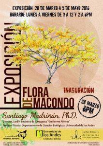 """Exposición """"Flora del Macondo"""""""